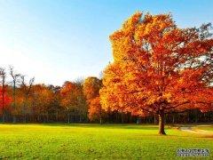 秋季干燥,要润肺